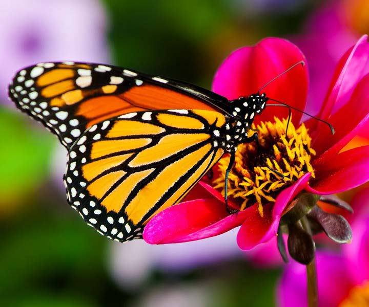 Холст с красками 17х22 по номер. в кор. (14цв.) Бабочка не летнем цветке (Арт. ХК-8157)